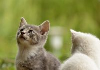 Tips When Bringing A New Cat Home To Another Cat