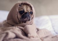 10 Responsible Pet Care Tips Owners Should Read